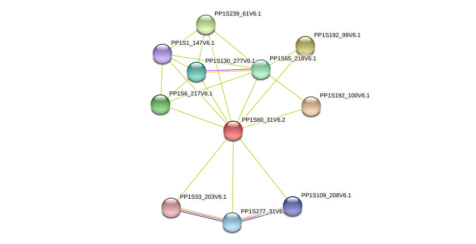 PP1S60_31V6.1 protein (Physcomitrella patens) - STRING interaction network