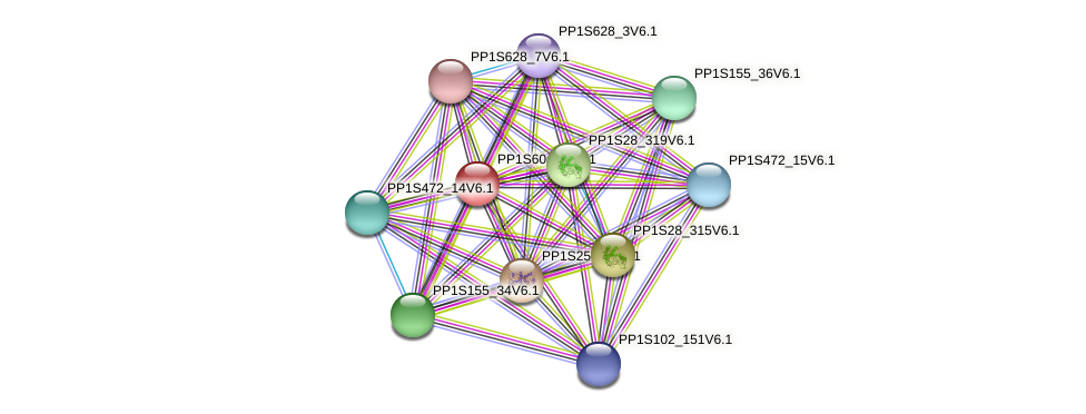 PP1S60_65V6.1 protein (Physcomitrella patens) - STRING interaction network
