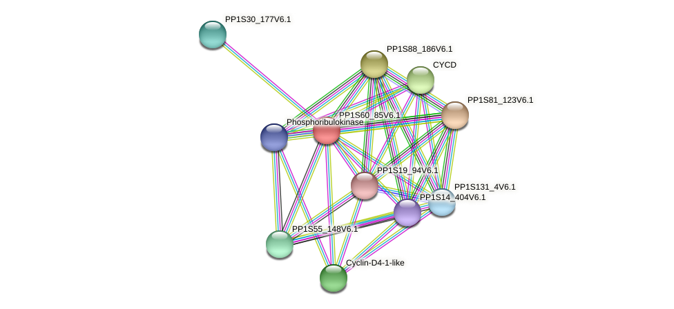 PP1S60_85V6.1 protein (Physcomitrella patens) - STRING interaction network