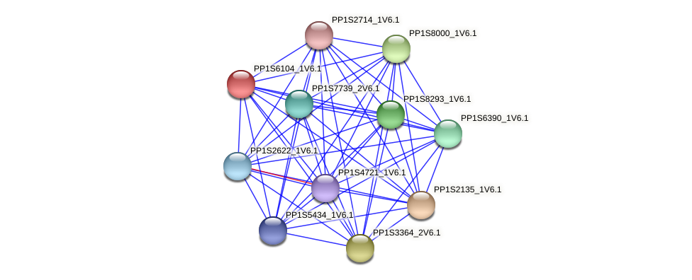PP1S6104_1V6.1 protein (Physcomitrella patens) - STRING interaction network
