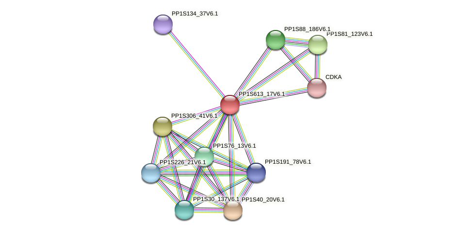 PP1S613_17V6.1 protein (Physcomitrella patens) - STRING interaction network