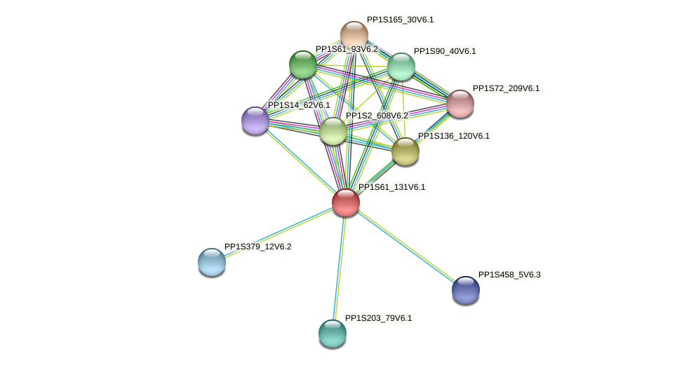 PP1S61_131V6.1 protein (Physcomitrella patens) - STRING interaction network