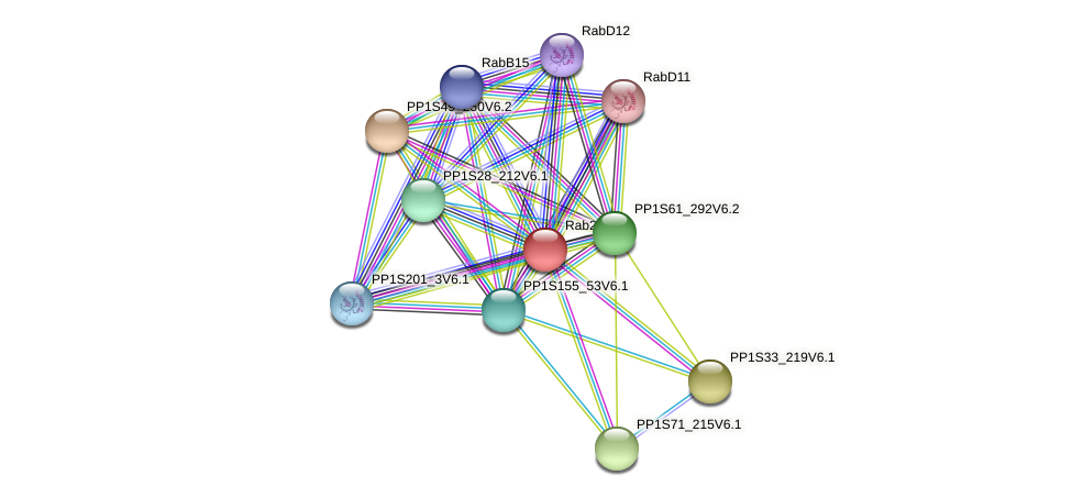 Rab21A1 protein (Physcomitrella patens) - STRING interaction network