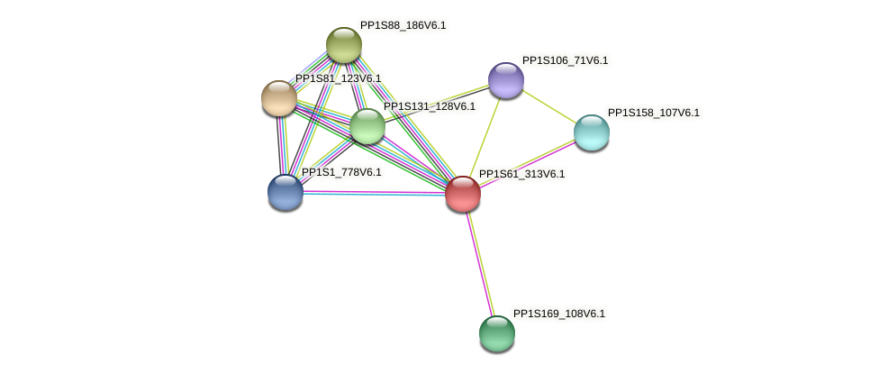 PP1S61_313V6.1 protein (Physcomitrella patens) - STRING interaction network
