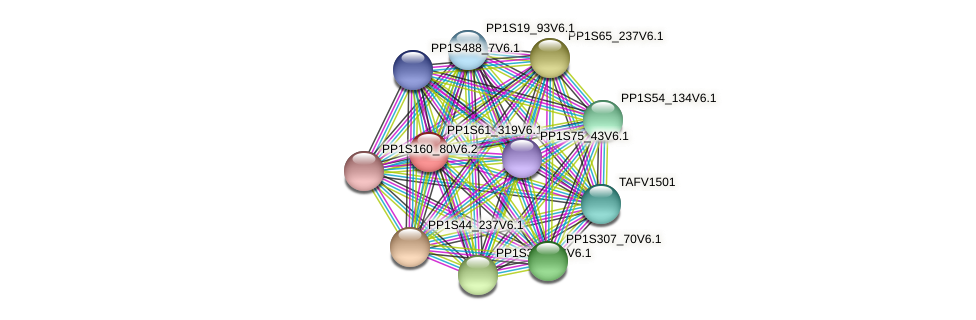 PP1S61_319V6.1 protein (Physcomitrella patens) - STRING interaction network