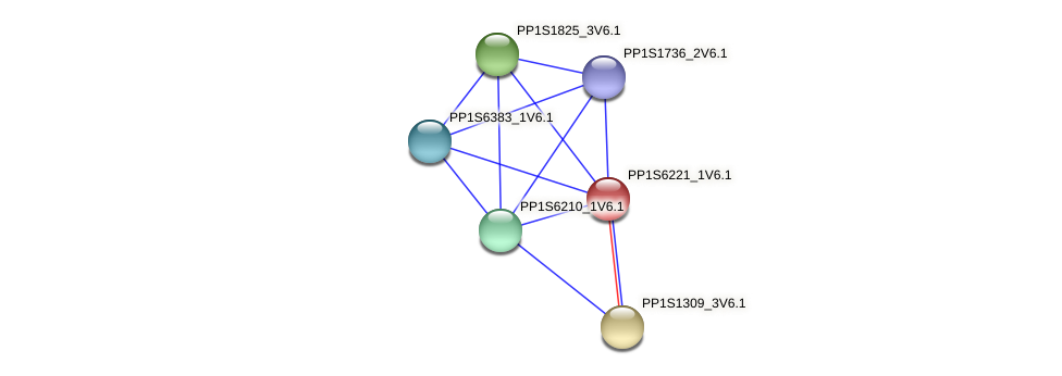 PP1S6221_1V6.1 protein (Physcomitrella patens) - STRING interaction network