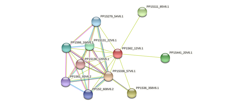 PP1S62_12V6.1 protein (Physcomitrella patens) - STRING interaction network