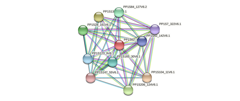 PP1S62_171V6.1 protein (Physcomitrella patens) - STRING interaction network