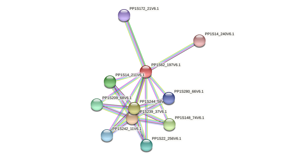 PP1S62_197V6.1 protein (Physcomitrella patens) - STRING interaction network