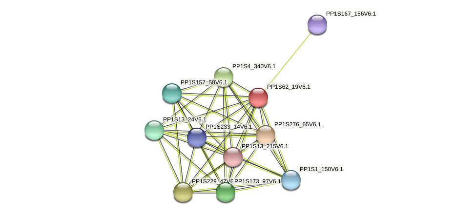 PP1S62_19V6.1 protein (Physcomitrella patens) - STRING interaction network