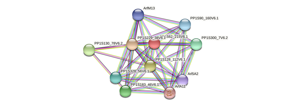 PP1S62_215V6.1 protein (Physcomitrella patens) - STRING interaction network
