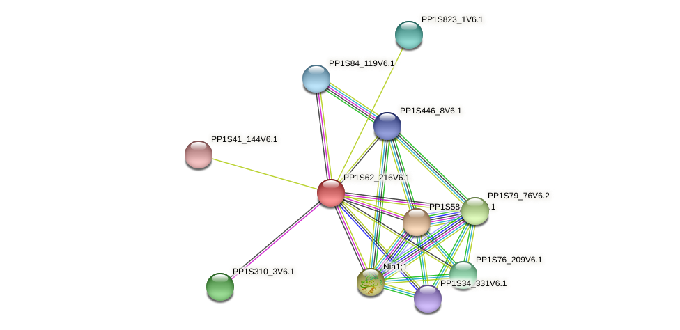 PP1S62_216V6.1 protein (Physcomitrella patens) - STRING interaction network