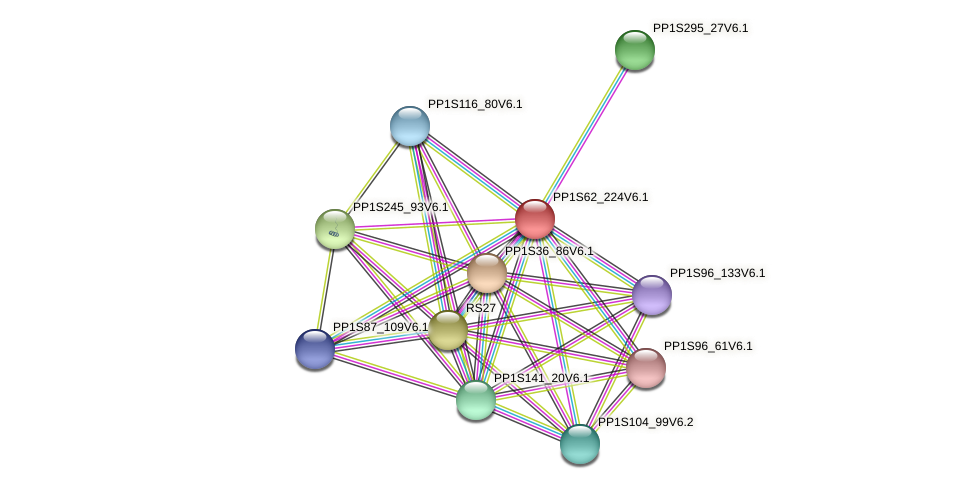 PP1S62_224V6.1 protein (Physcomitrella patens) - STRING interaction network