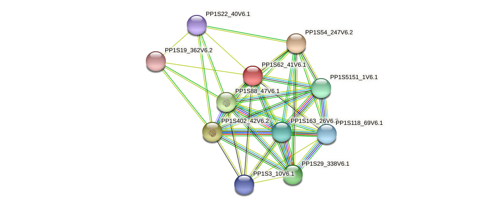 PP1S62_41V6.1 protein (Physcomitrella patens) - STRING interaction network