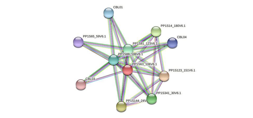 PP1S63_106V6.1 protein (Physcomitrella patens) - STRING interaction network