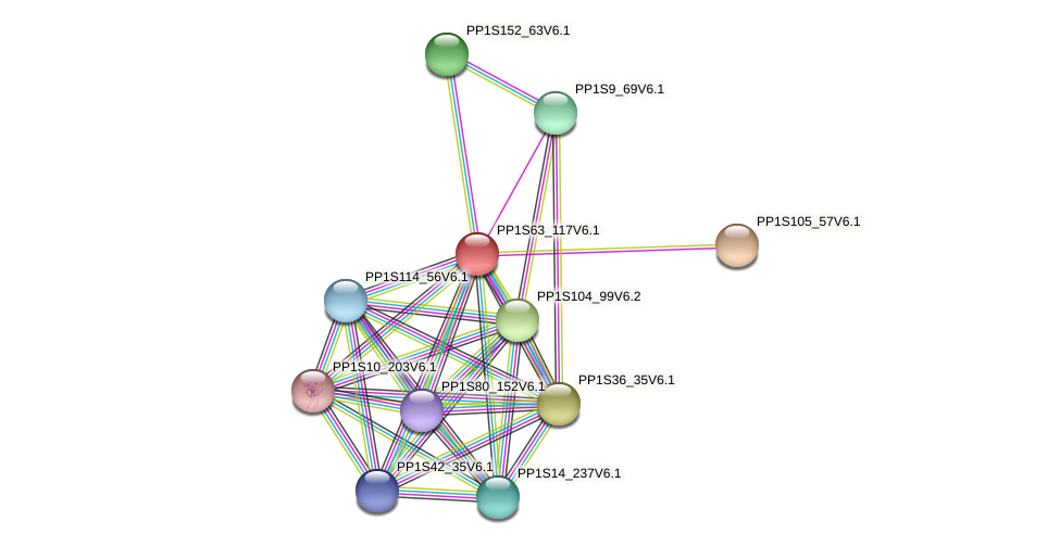 PP1S63_117V6.1 protein (Physcomitrella patens) - STRING interaction network