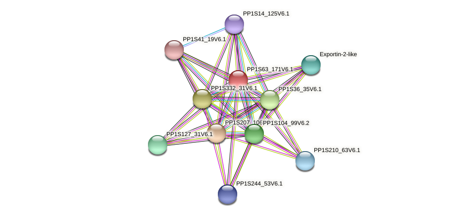 PP1S63_171V6.1 protein (Physcomitrella patens) - STRING interaction network