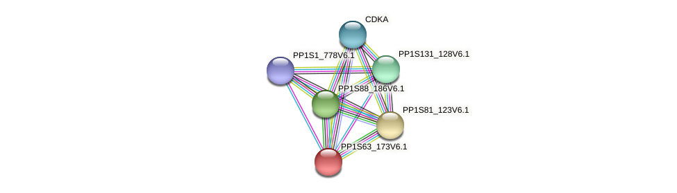 PP1S63_173V6.1 protein (Physcomitrella patens) - STRING interaction network