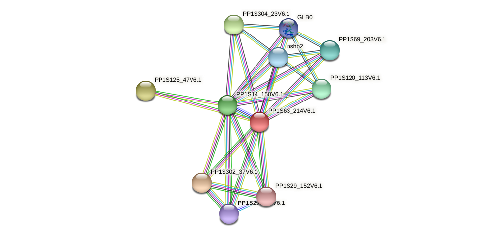 PP1S63_214V6.1 protein (Physcomitrella patens) - STRING interaction network