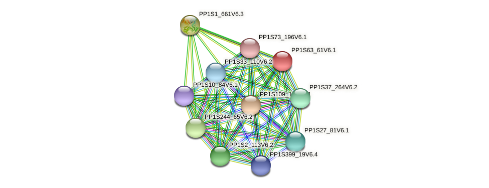 PP1S63_61V6.1 protein (Physcomitrella patens) - STRING interaction network