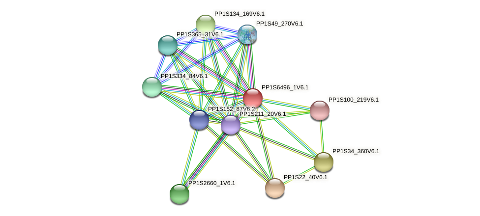 PP1S6496_1V6.1 protein (Physcomitrella patens) - STRING interaction network