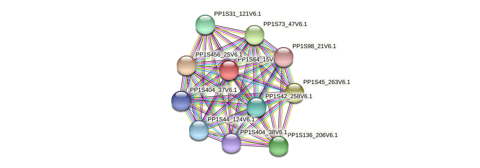 PP1S64_15V6.1 protein (Physcomitrella patens) - STRING interaction network