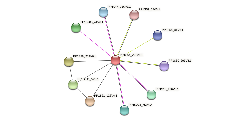 PP1S64_201V6.1 protein (Physcomitrella patens) - STRING interaction network