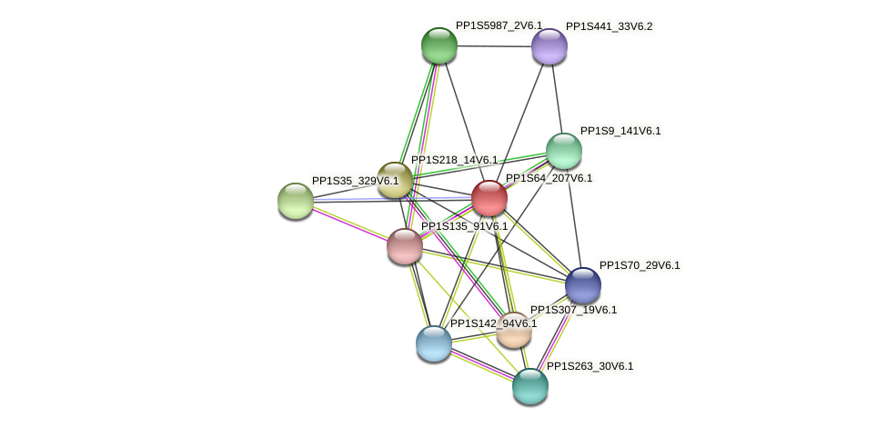 PP1S64_207V6.1 protein (Physcomitrella patens) - STRING interaction network