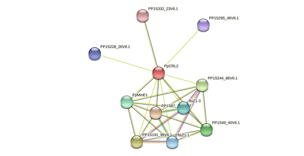 PpCRL2 protein (Physcomitrella patens) - STRING interaction network