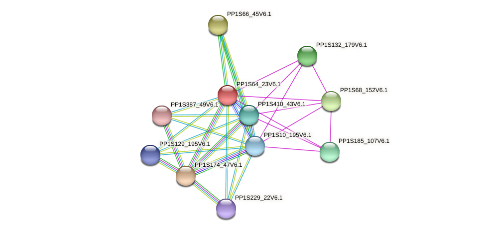 PP1S64_23V6.1 protein (Physcomitrella patens) - STRING interaction network