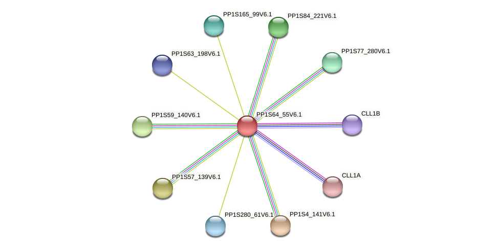 PP1S64_55V6.1 protein (Physcomitrella patens) - STRING interaction network