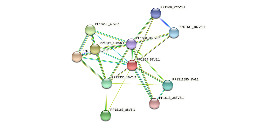 PP1S64_57V6.1 protein (Physcomitrella patens) - STRING interaction network