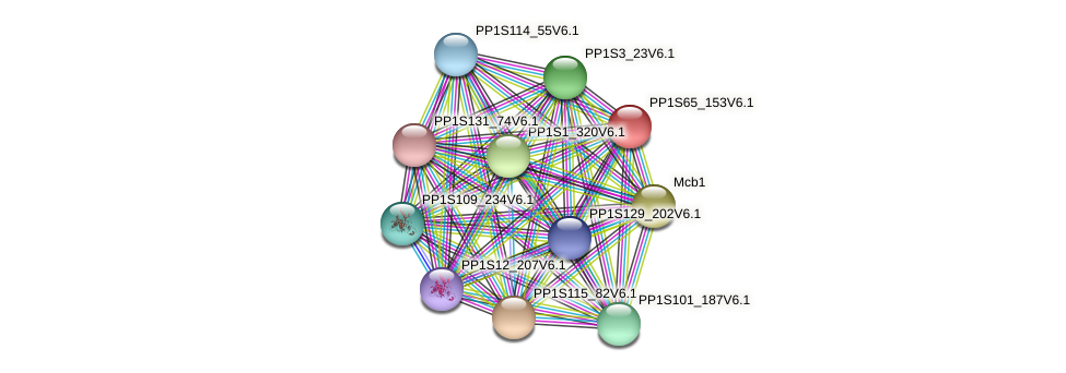 PP1S65_153V6.1 protein (Physcomitrella patens) - STRING interaction network
