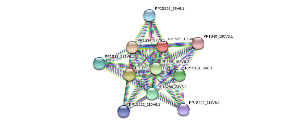 PP1S65_185V6.1 protein (Physcomitrella patens) - STRING interaction network