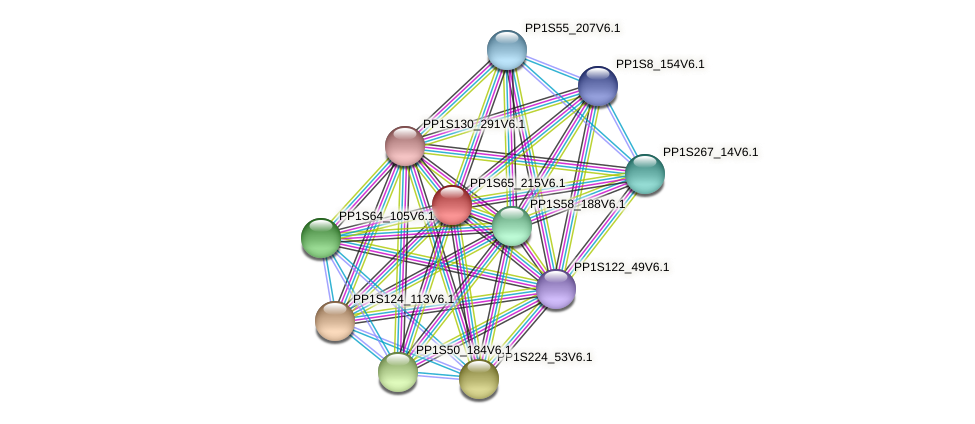 PP1S65_215V6.1 protein (Physcomitrella patens) - STRING interaction network
