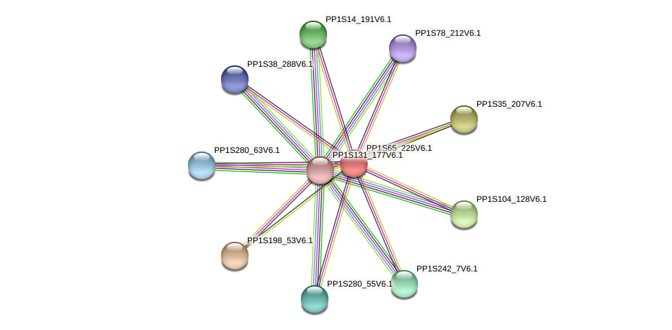 PP1S65_225V6.1 protein (Physcomitrella patens) - STRING interaction network