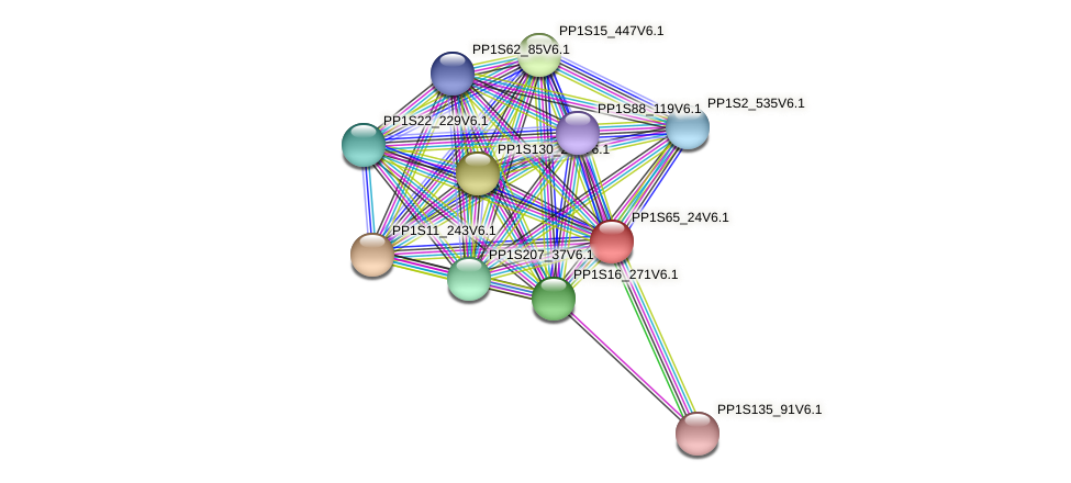 PP1S65_24V6.1 protein (Physcomitrella patens) - STRING interaction network