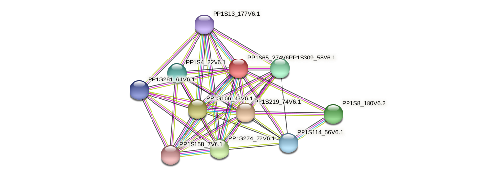 PP1S65_274V6.1 protein (Physcomitrella patens) - STRING interaction network