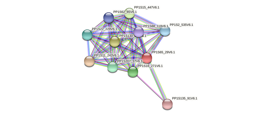 PP1S65_29V6.1 protein (Physcomitrella patens) - STRING interaction network