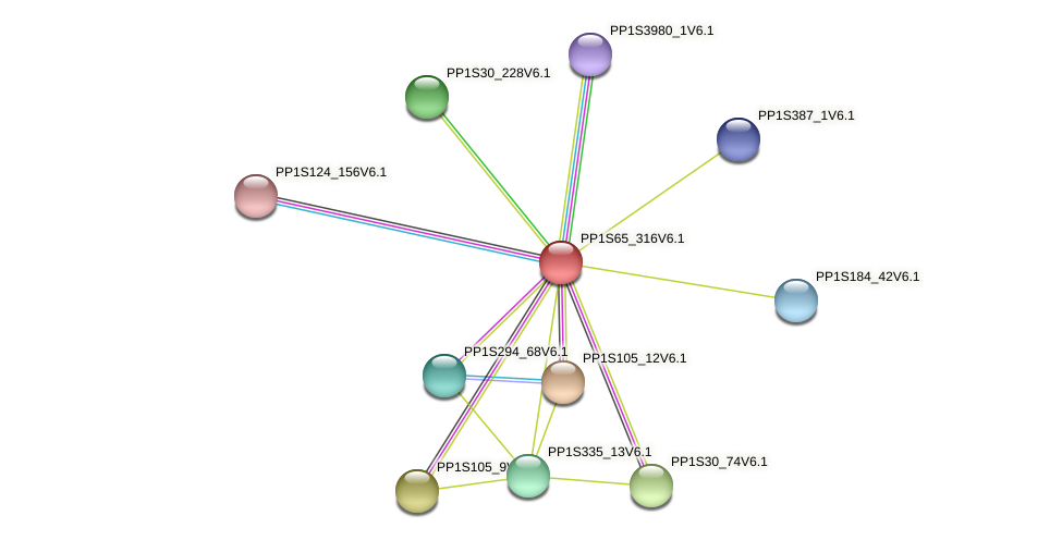 PP1S65_316V6.1 protein (Physcomitrella patens) - STRING interaction network