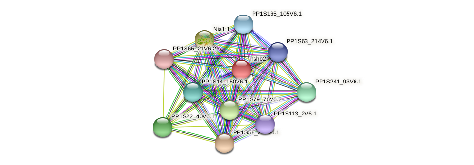nshb2 protein (Physcomitrella patens) - STRING interaction network