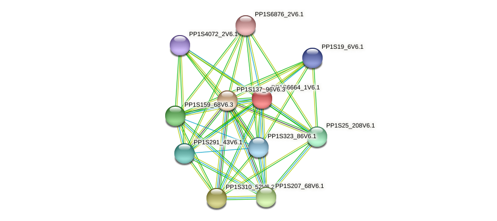 PP1S6664_1V6.1 protein (Physcomitrella patens) - STRING interaction network