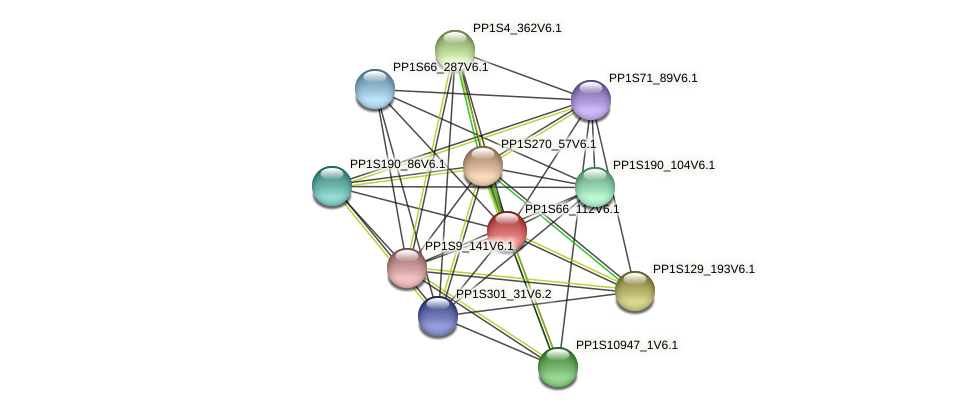 PP1S66_112V6.1 protein (Physcomitrella patens) - STRING interaction network