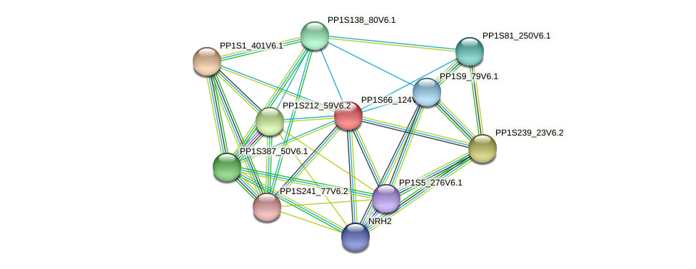 PP1S66_124V6.1 protein (Physcomitrella patens) - STRING interaction network
