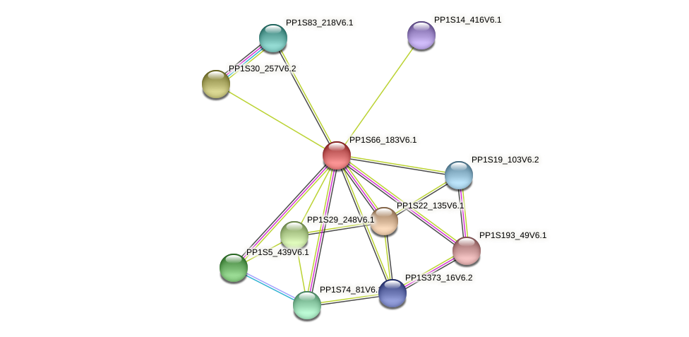 PP1S66_183V6.1 protein (Physcomitrella patens) - STRING interaction network