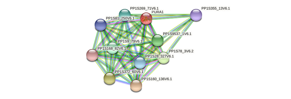 PURA1 protein (Physcomitrella patens) - STRING interaction network