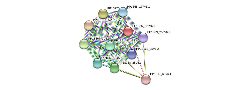 PP1S66_196V6.1 protein (Physcomitrella patens) - STRING interaction network