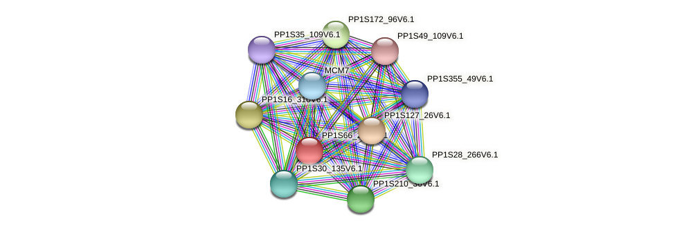 PP1S66_225V6.1 protein (Physcomitrella patens) - STRING interaction network