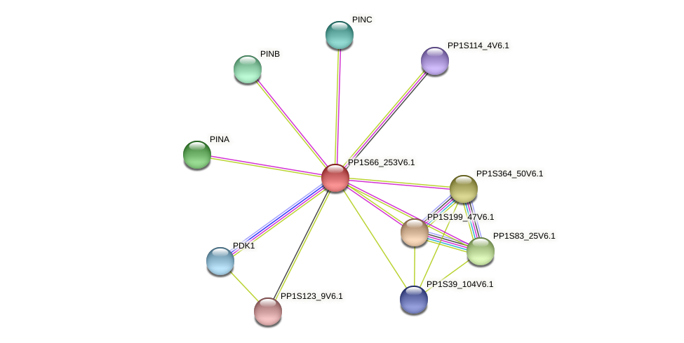 PP1S66_253V6.1 protein (Physcomitrella patens) - STRING interaction network