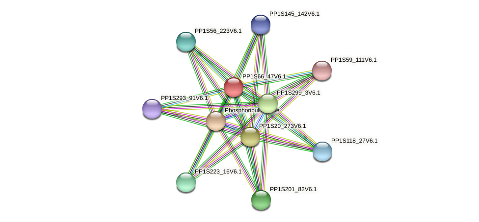 PP1S66_47V6.1 protein (Physcomitrella patens) - STRING interaction network